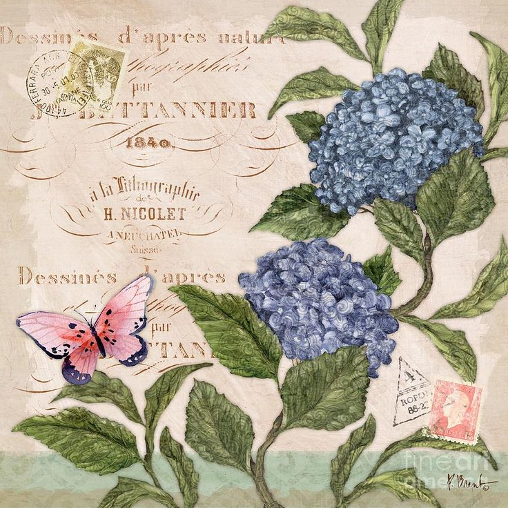 Parisian.Hydrangea.02.of.03.-.Paul.Brent