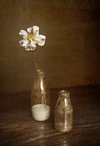 Milk or Cream? is visual play on the old milk bottles we remember whilst growing up in NZ.