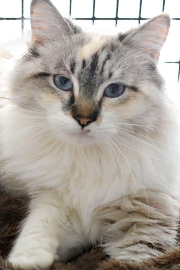 126 best Pet Rescue Stories images on Pinterest