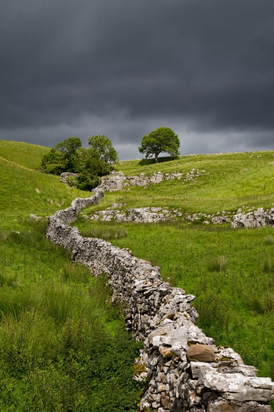 Yorkshire Dales, England, Wander the wood
