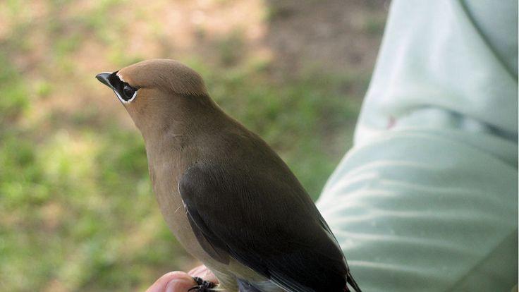 Spring Birding Festival (April/May) -  ... details