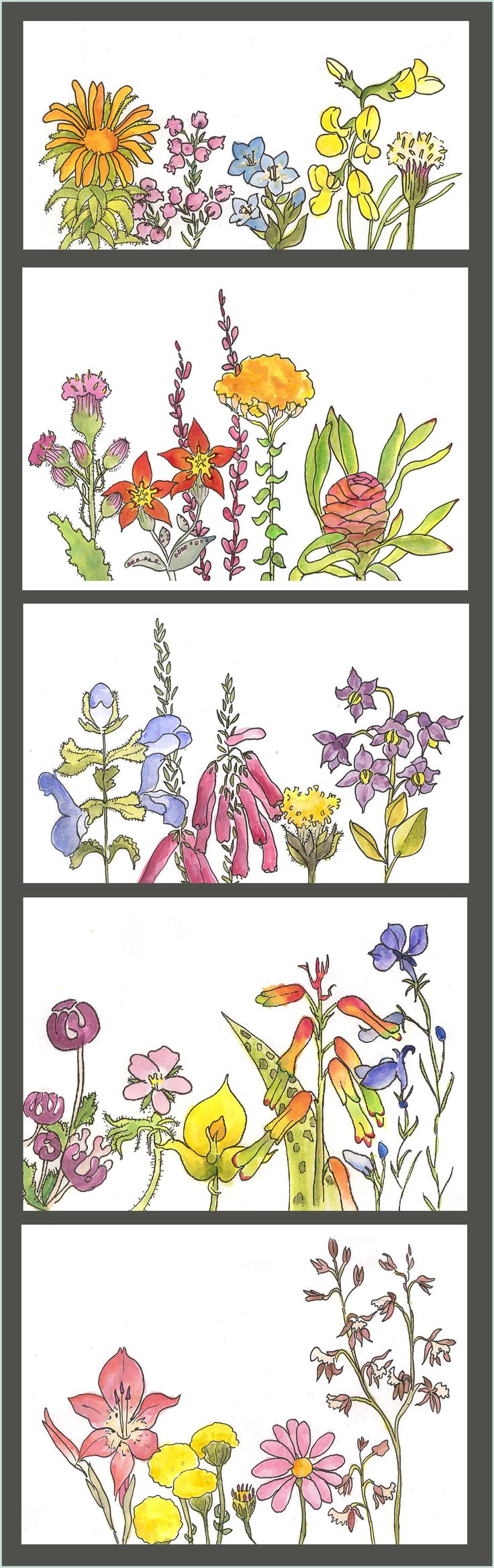 flowers flowers and more flowers - watercolour and ink - for Clip Clop illustrations