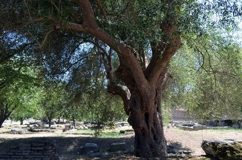 Ancient Olympic Games Area,Olympia, Greece