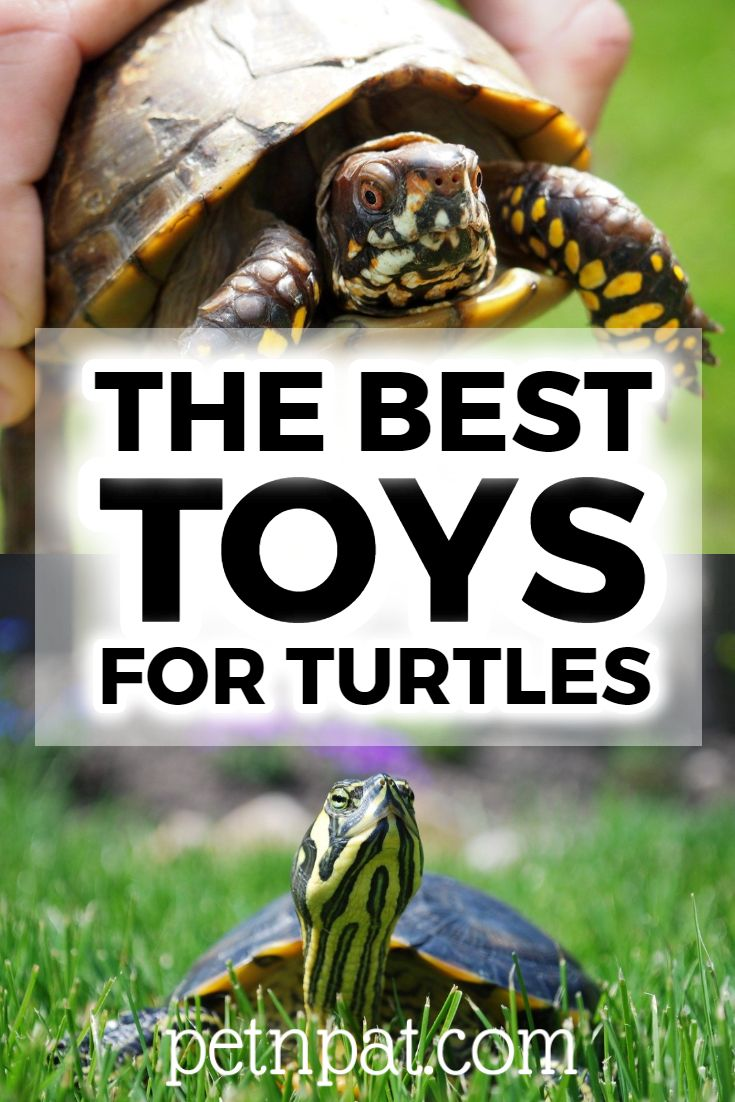 The Best Toys For Turtles Logs, Caves, Live Food, & More