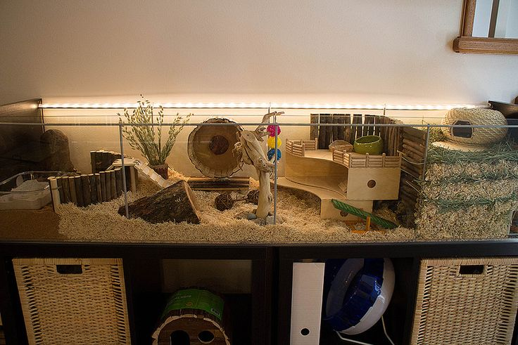 Ikea hack Detlof hamster cage | I'm planning on getting an ikea cage just because they are so much more spacious.