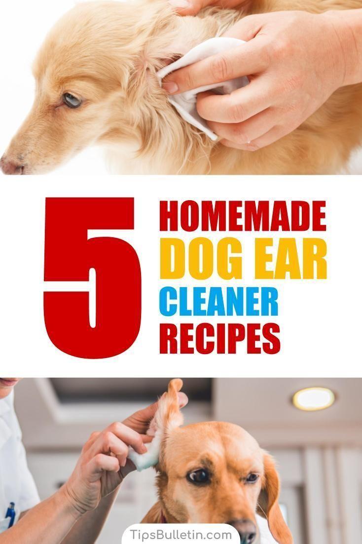 5 homemade dog ear cleaner recipes dog ear cleaner