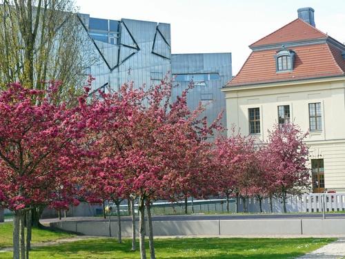 ღღ Japanisches Kirschblütenfest im Jüdischen Museum..