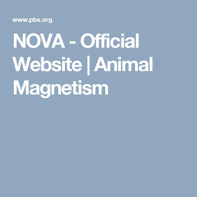 NOVA - Official Website | Animal Magnetism