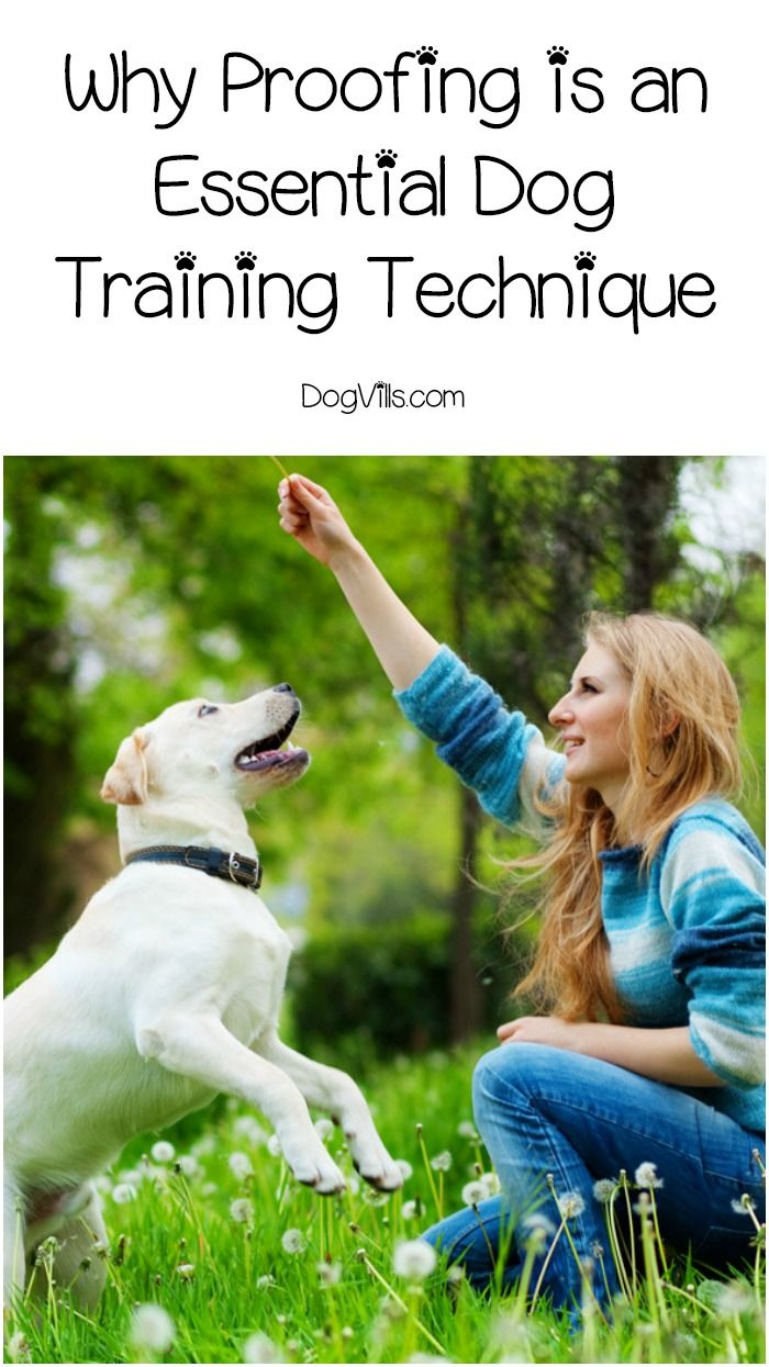 Proofing your dog's training isn't as difficult or time consuming as it sounds. Check out these tips to help you develop more trust in your dog's response!