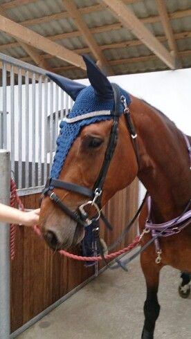 Hästluva blå