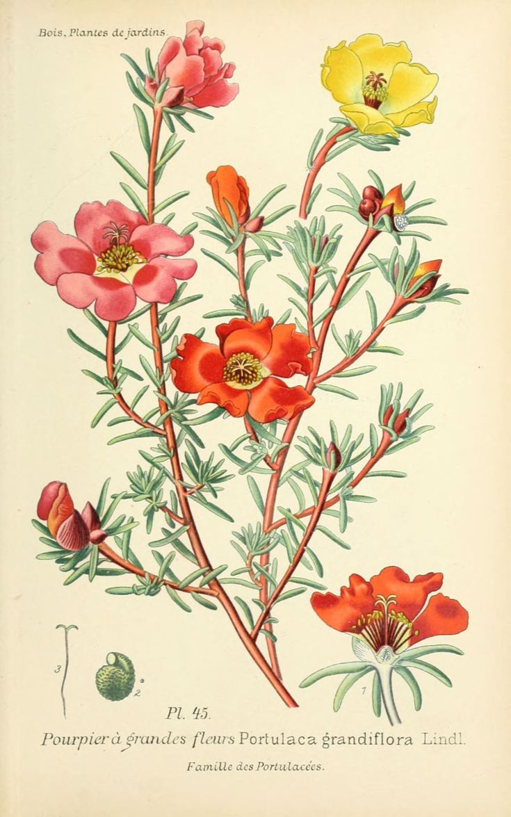 1319 best botanical prints images on pinterest botanical for Botanic fleurs artificielles