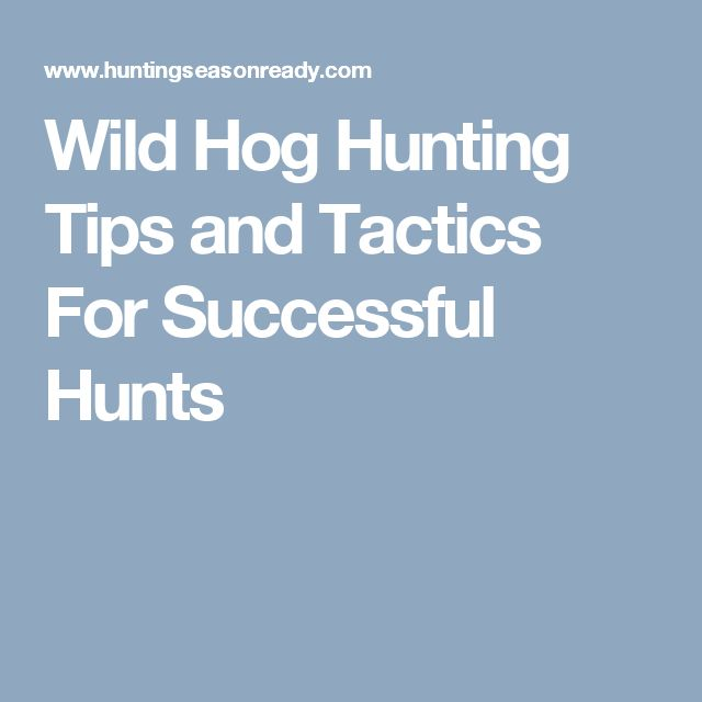 Wild Hog Hunting Tips and Tactics For Successful Hunts