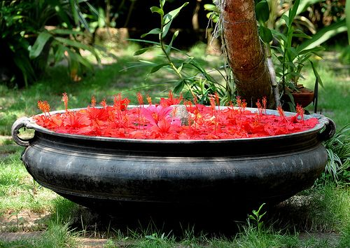 A traditional 'urli' bowl filled to capacity with floating red hibiscus