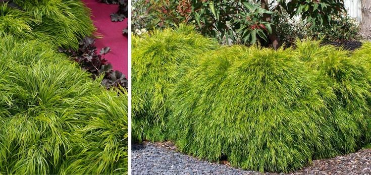 20 best plant it it shall grow images on pinterest for Tropical low maintenance plants