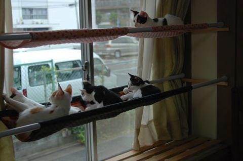 Eenvoudig maar stevig meer kats hangplek