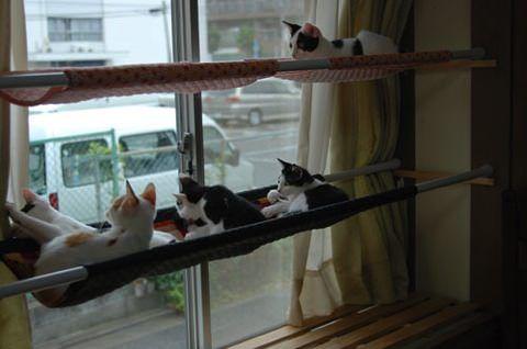 猫のための素敵な自作ハンモック5選 | ネコモノ帳