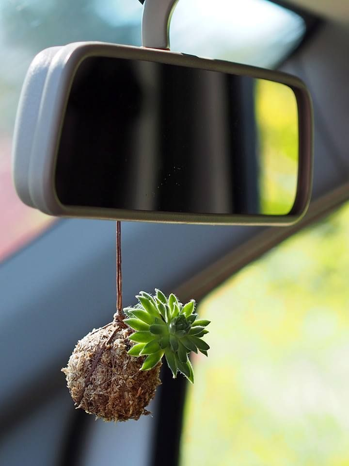Succulent Kokedama for the car! Great DIY gift idea