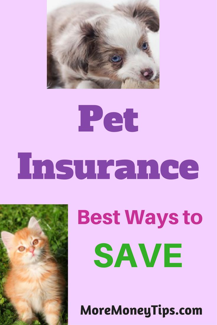 Real life case studies to guide you on pet insurance. Helpful advice and web links provided for you to make the right decisions. #pethealth  #pets #petlovers #petinsurance #veterinarian