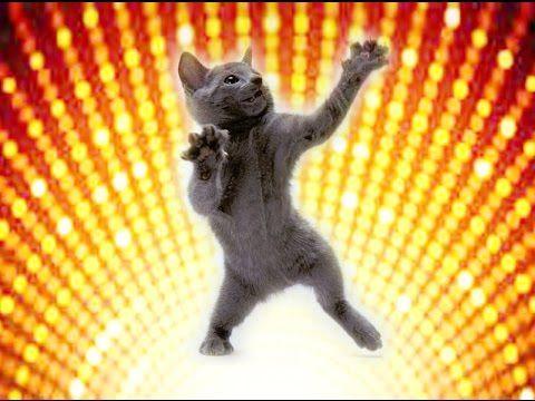 WAW! SUPER HIT! Смешные и очень весёлые кошки.