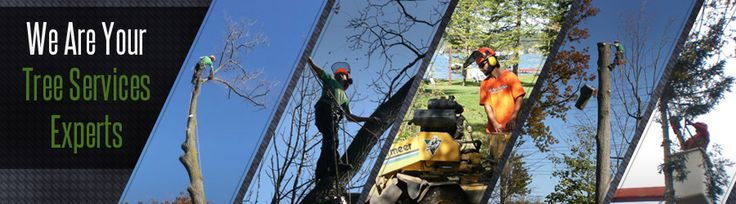 Plumb trees is a well know for a tree care specialist in Sydney. They provide the services such as, tree removal, tree trimming and pruning, tree root removal, palm tree clean up services and many more at reliable prices only. For more details, visit http://www.plumbtrees.com.au/