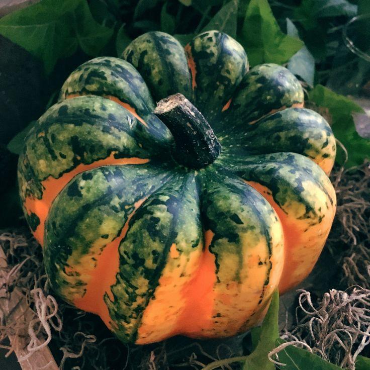 Pompoen - pumpkin