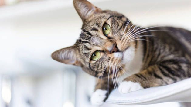 You may think you know your feline friend inside-out but here are some amazing facts about cats which may surprise you.