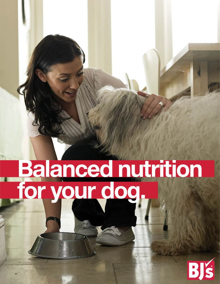 Vet-Approved Dog Food: BJ's own Berkley Jensen dog food provides the same balanced nutrition for dogs as national brands, but costs less. http://stocked.bjs.com/content/make-him-happy-and-healthy