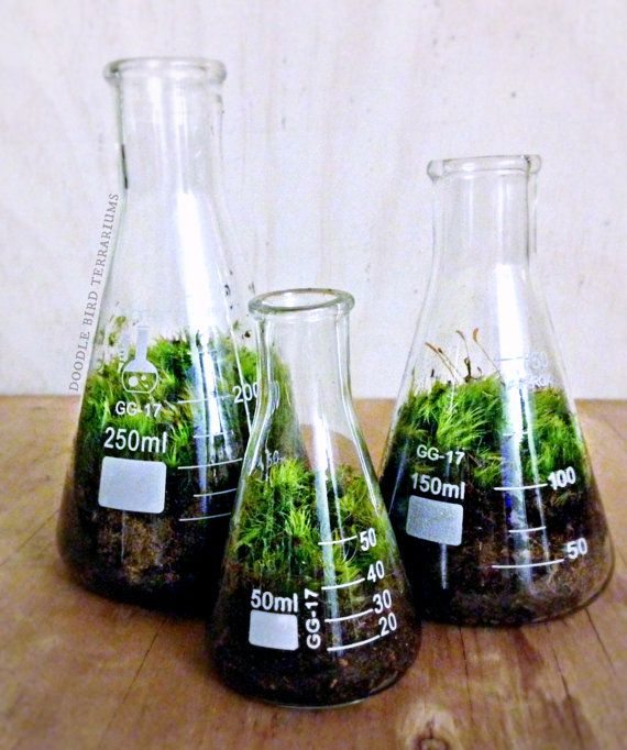 Hey, I found this really awesome Etsy listing at https://www.etsy.com/listing/156280691/science-beaker-terrarium-set-industrial