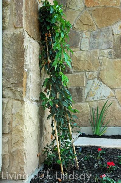 27 Best Vertical Gardens Images On Pinterest Vertical