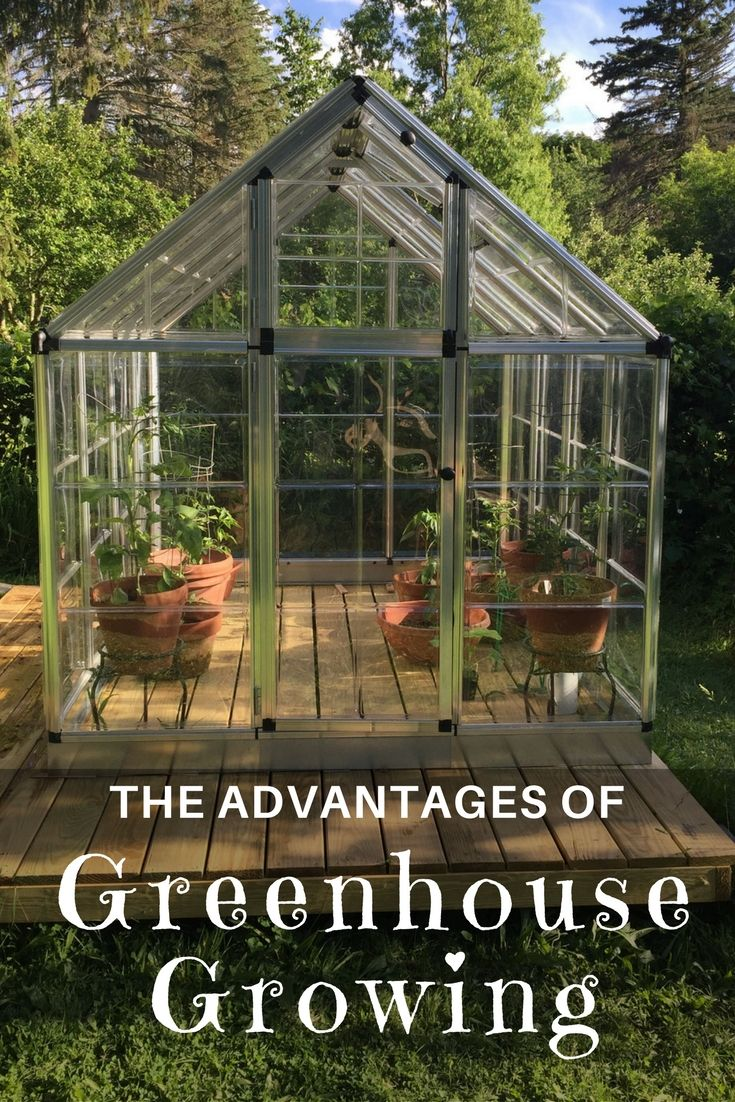 Do you have an interest in greenhouse growing? Learn about the advantages of being a greenhouse gardener and discover greenhouse gardening products by @palramapps!