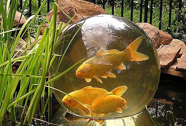 cool+aquarium+ideas