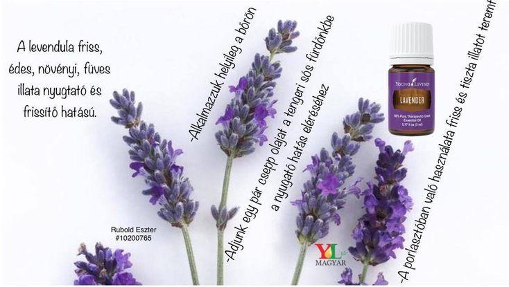 Tudj meg többet a levendula illóolaj felhasználásáról! Hogyan és mire használhatod?