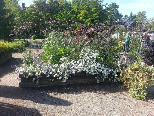 I botaniska tregården