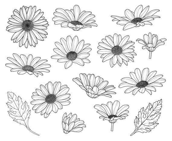 Gänseblümchen, Blumen, Kontur, SVG, Grafik, Illustration, Vektor, Logo, Digital, Clipart