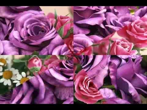 Gyönyörű rózsák  tangó zenével