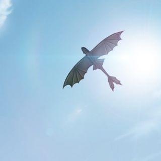 Das Bild kann enthalten: Himmel, Vögel