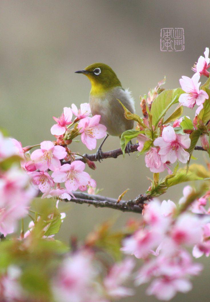 Sakura (Cherry blossom) e Uguisu representam a primavera no Japão.