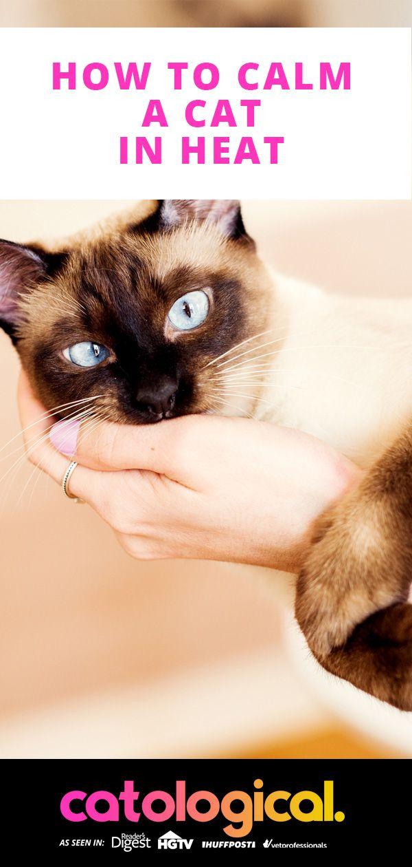 94470965032d1a15c44a34a24fe219ae - How Do You Get A Cat To Calm Down