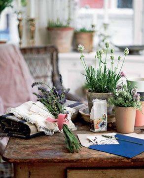 De dufter rent og beroligende og er dekorative og dejlige at bruge i te eller salater. Og det skønne ved lavendel er, at de er så taknemmelige at have med at gøre indenfor såvel som udenfor