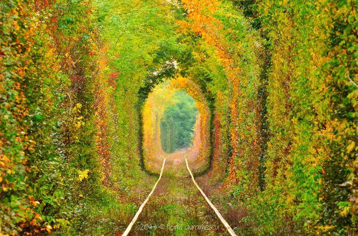 Tunnel of love, Romania (coordinates: 45.481758, 22.281572)
