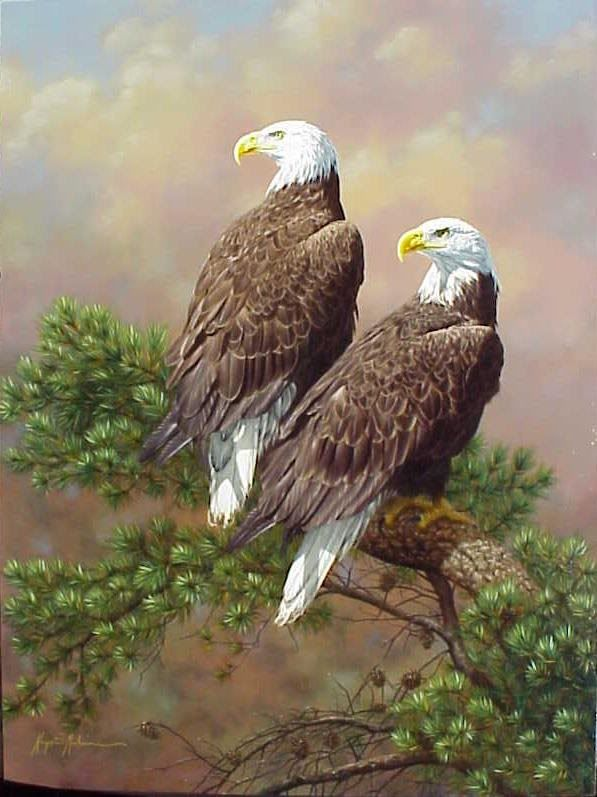 bald eagles                                                                                                                                                     More
