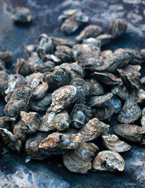 Southern Style: A Lowcounty Oyster Roast  Celebrate oyster season with an oyster roast in South Carolina.