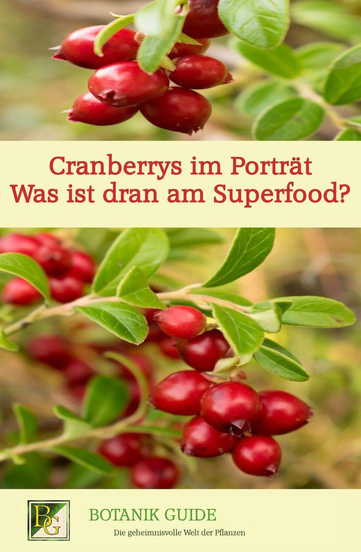 Cranberrys: Helfen sie wirklich bei Blasenentzündung? Weshalb Farmer ihre Plantagen im Wasser versenken. Cranberrys im Hüpftest & mehr.