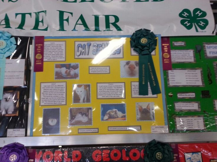 Marion County fair - 4-H building in Indianapolis, IN
