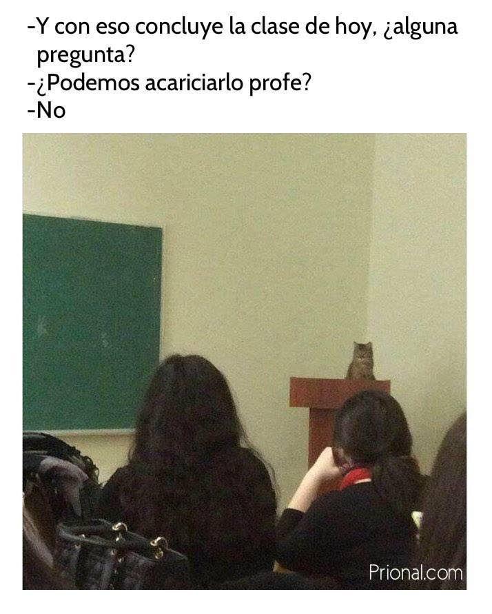 profesor gato   Memes graciosos, Meme gato, Imágenes graciosas