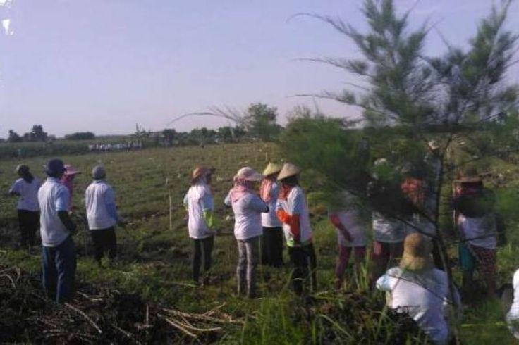 583b7cc42c36d-lokasi-hari-menanam-pohon-di-tuban-yang-dihadiri-presiden-jokowi_663_382
