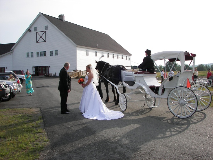 100 Best Horse And Carriages Images On Pinterest Horse