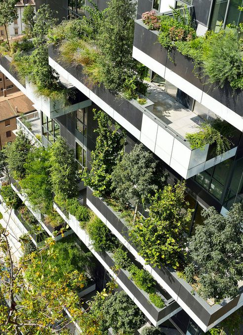 Undo the Dry Spell: inspirational imagery (garden)
