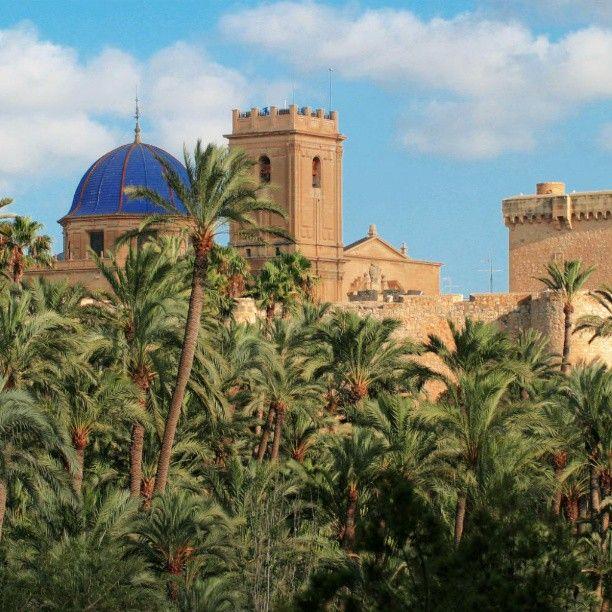 Otra foto que me encanta del blog de #visitelche esas preciosa vista de #santamaria y del #castillo con todas esas #palmeras #elche es #preciosa #elcheoasismediterraneo #instagram #instamania #iphone #iphonesia #iloveelche