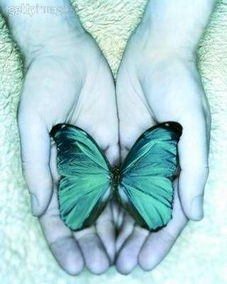 thyroid cancer carl sagan blue box blue butterfly tiffany blue blue ...
